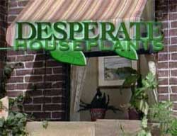 Sesame Street's parody of Desperate Housewives.